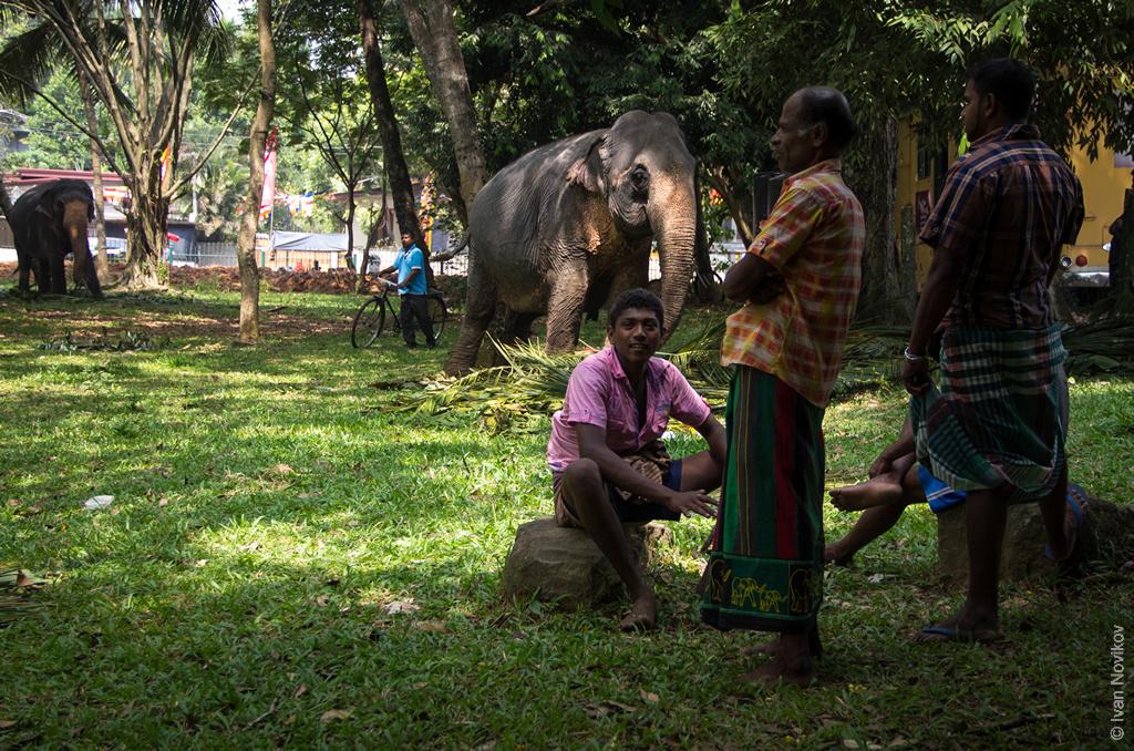 2016_02_Sri_Lanka-54.jpg