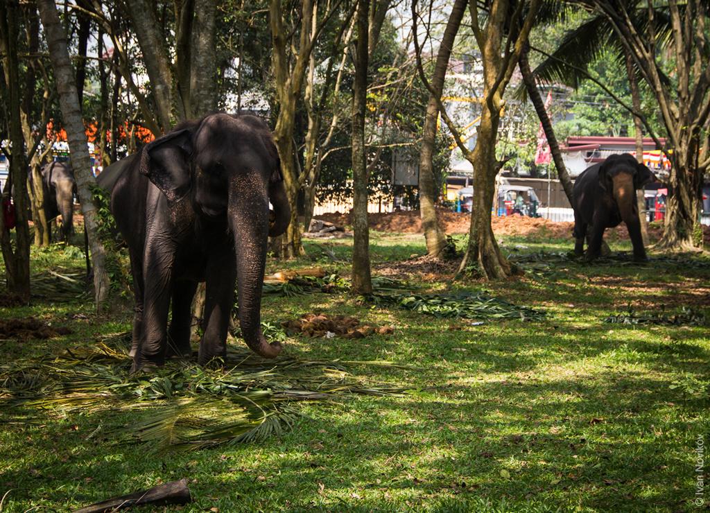 2016_02_Sri_Lanka-56.jpg