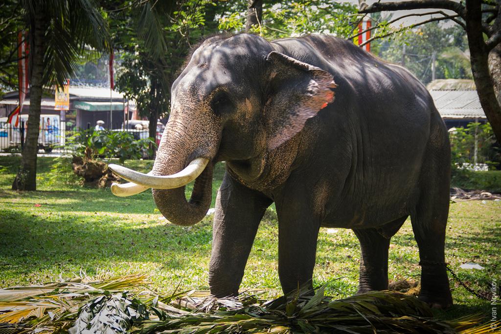 2016_02_Sri_Lanka-61.jpg