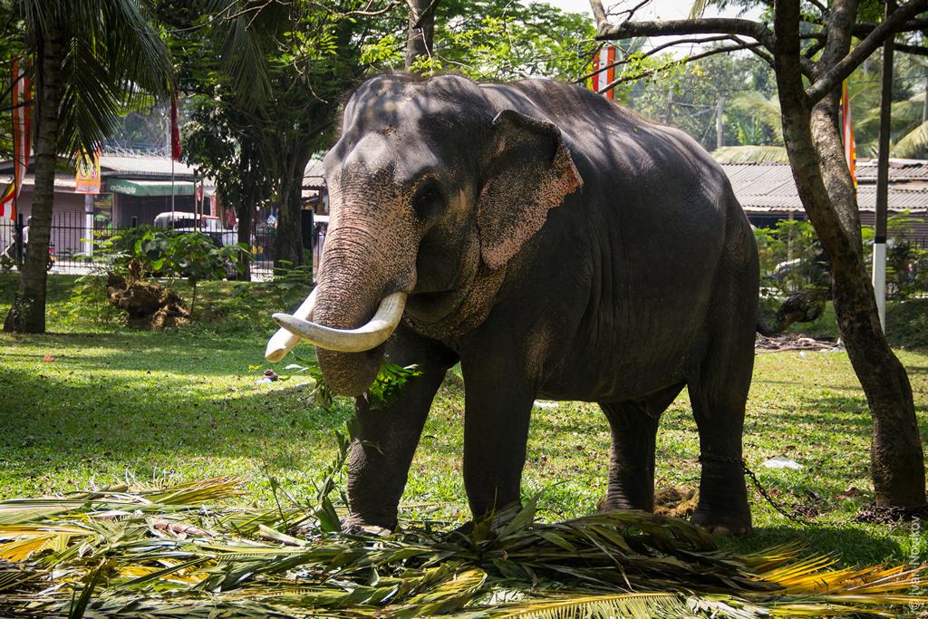 2016_02_Sri_Lanka-64.jpg