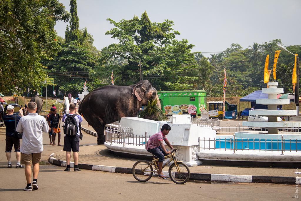 2016_02_Sri_Lanka-76.jpg