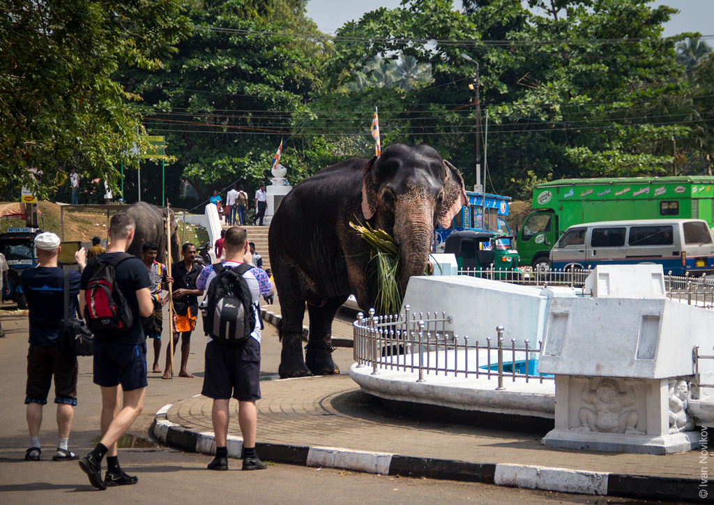 2016_02_Sri_Lanka-77.jpg