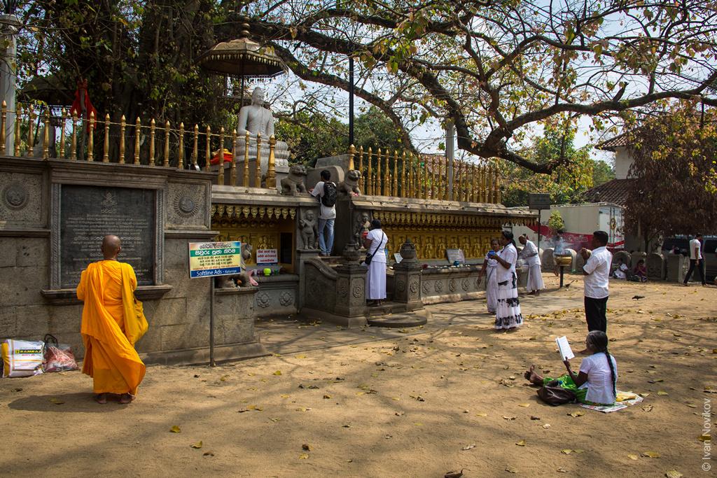 2016_02_Sri_Lanka-90.jpg