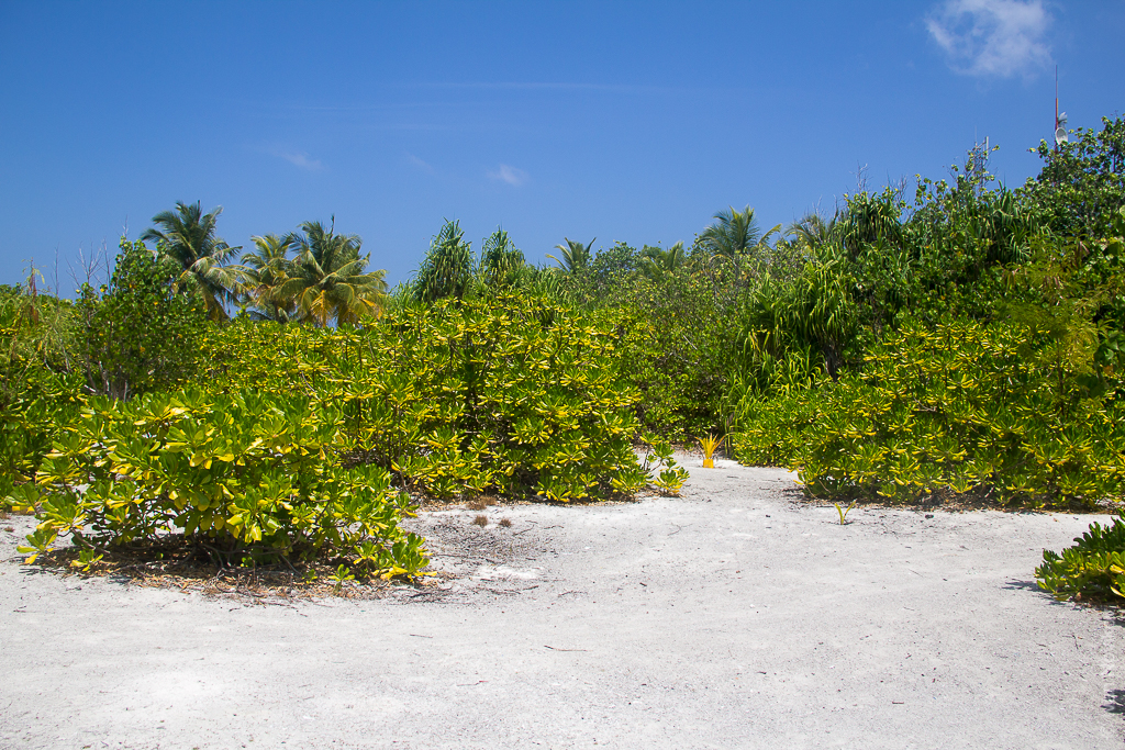 2016_02_Maldives_00076.jpg