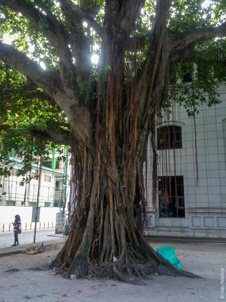 2016_02_Maldives_Sony_00022.jpg