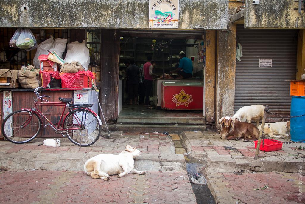 2016_04_Mumbai_00013.jpg