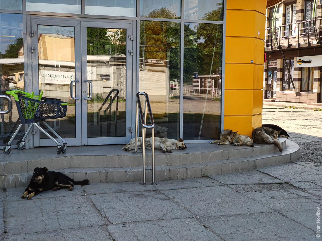 2020_06_Baltiysk_00332.jpg