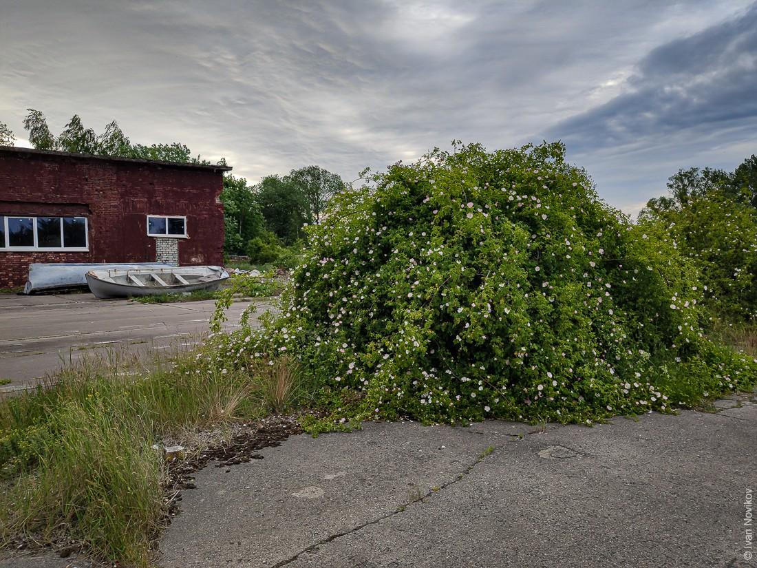 2020_06_Baltiysk_00414.jpg