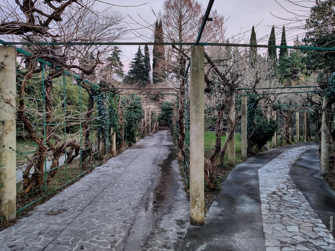 2021_02_Dendrarii_00173.jpg