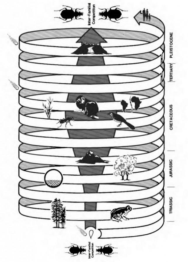 Как энтомолог видит эволюцию