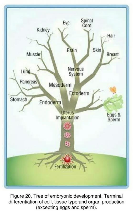 Смарт дерево органов