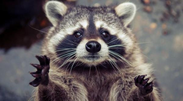 контактный зоопарк.jpg