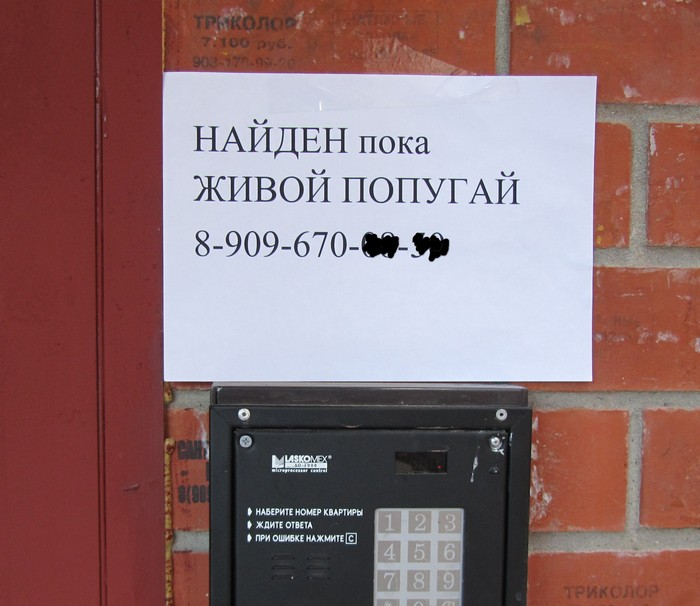 Popugay_2