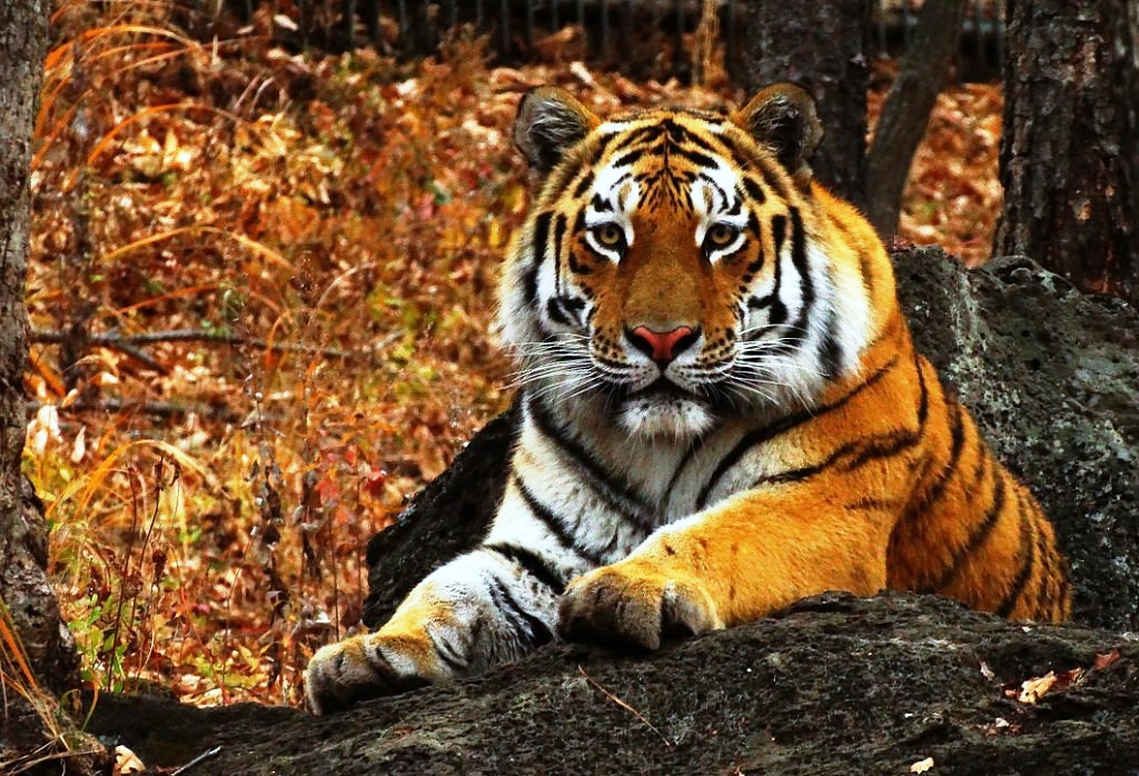 """Национальный парк """"Зов тигра"""""""