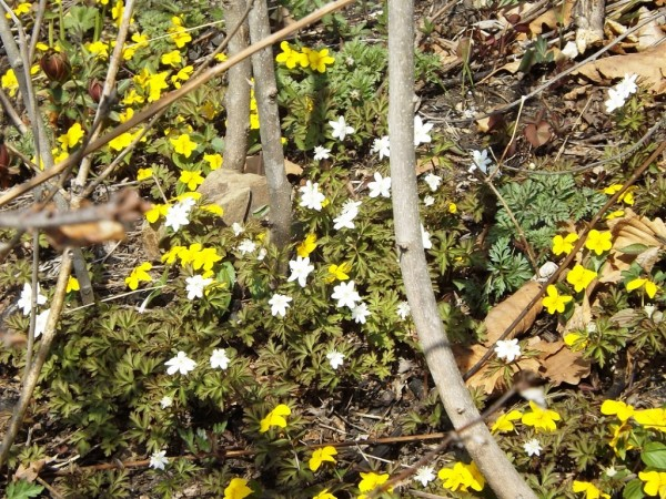 Весна в Приморье