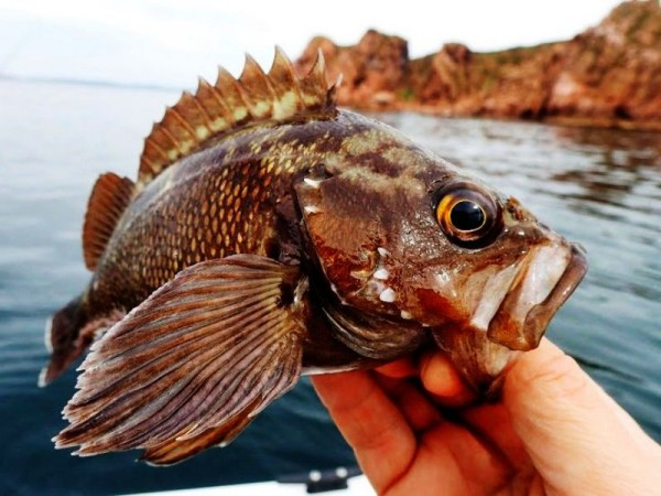 Rock Fishing