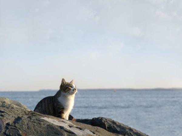 015_cats