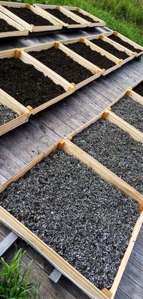 Сушка ферментированного листа малины лесной производится по той же щадящей технологии, что и Иван-чая #иварчай