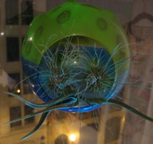 Air plant globe.