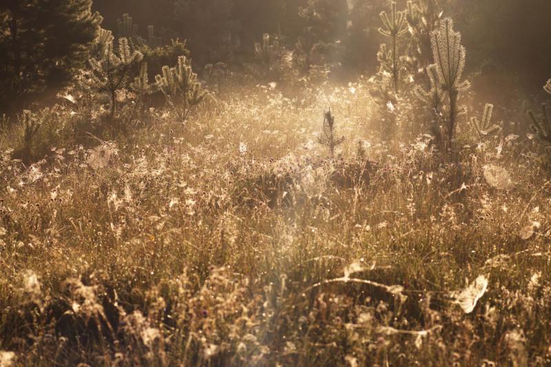 006_утро в лесу_resize.jpg