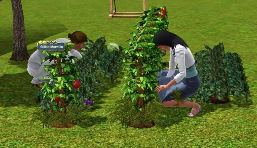0467 Garden