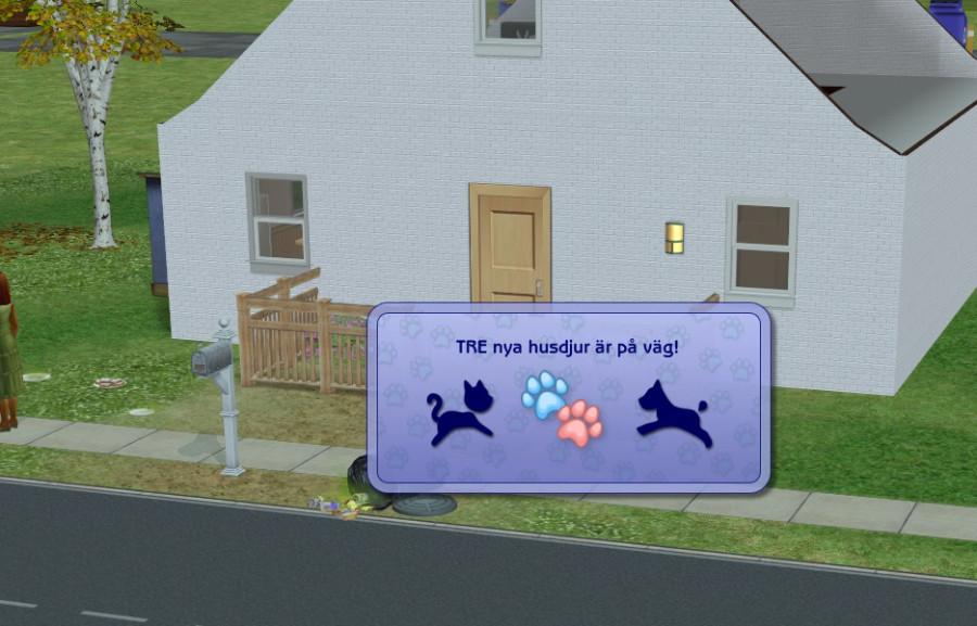 1011 Puppies