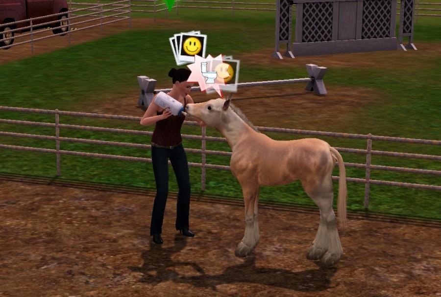 0013 BAby horse