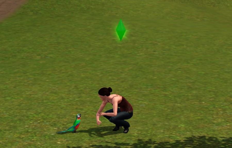 0031 Bird
