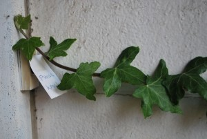 ivy cannot read.jpg