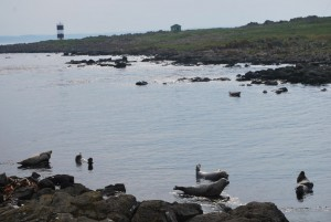 seals by lighthouse.jpg