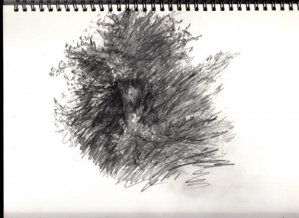 treeface drawn in situ .smaller.jpg