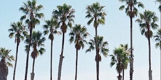 Palm Trees Tumblr Header