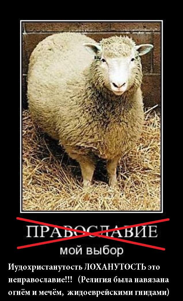 немного демотиваторы про овец внимание