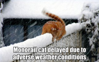 monorail cat winter