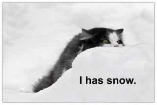 i has a snow