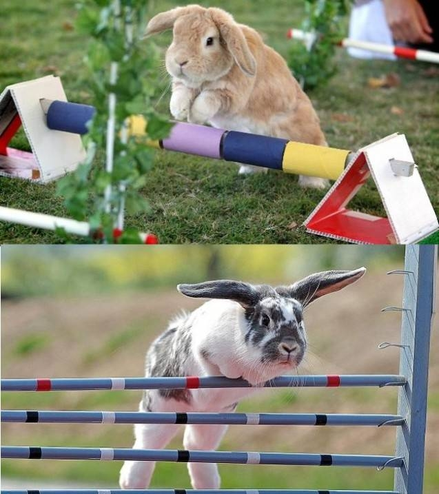 Умилительные факты о животных