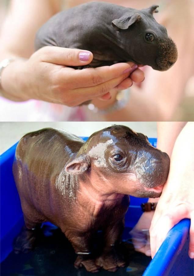 Умилительные факты о животных4