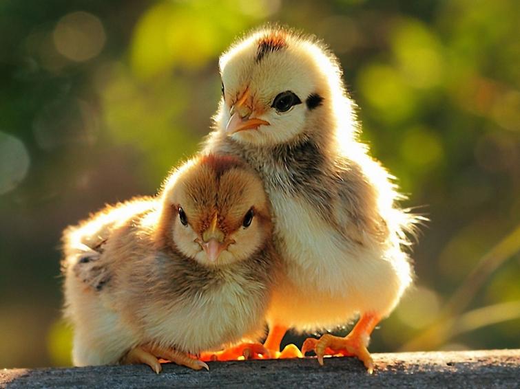 Умилительные факты о животных12