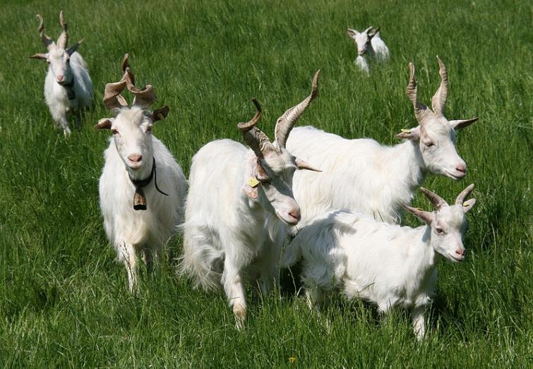 Умилительные факты о животных26