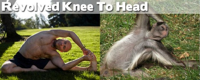 the_animal_guide_to_yoga_18