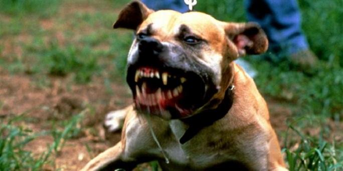 почему у собаки пахнет изо рта мочой