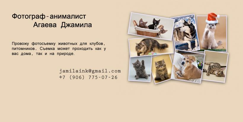 21720_181509185323011_313523509_n