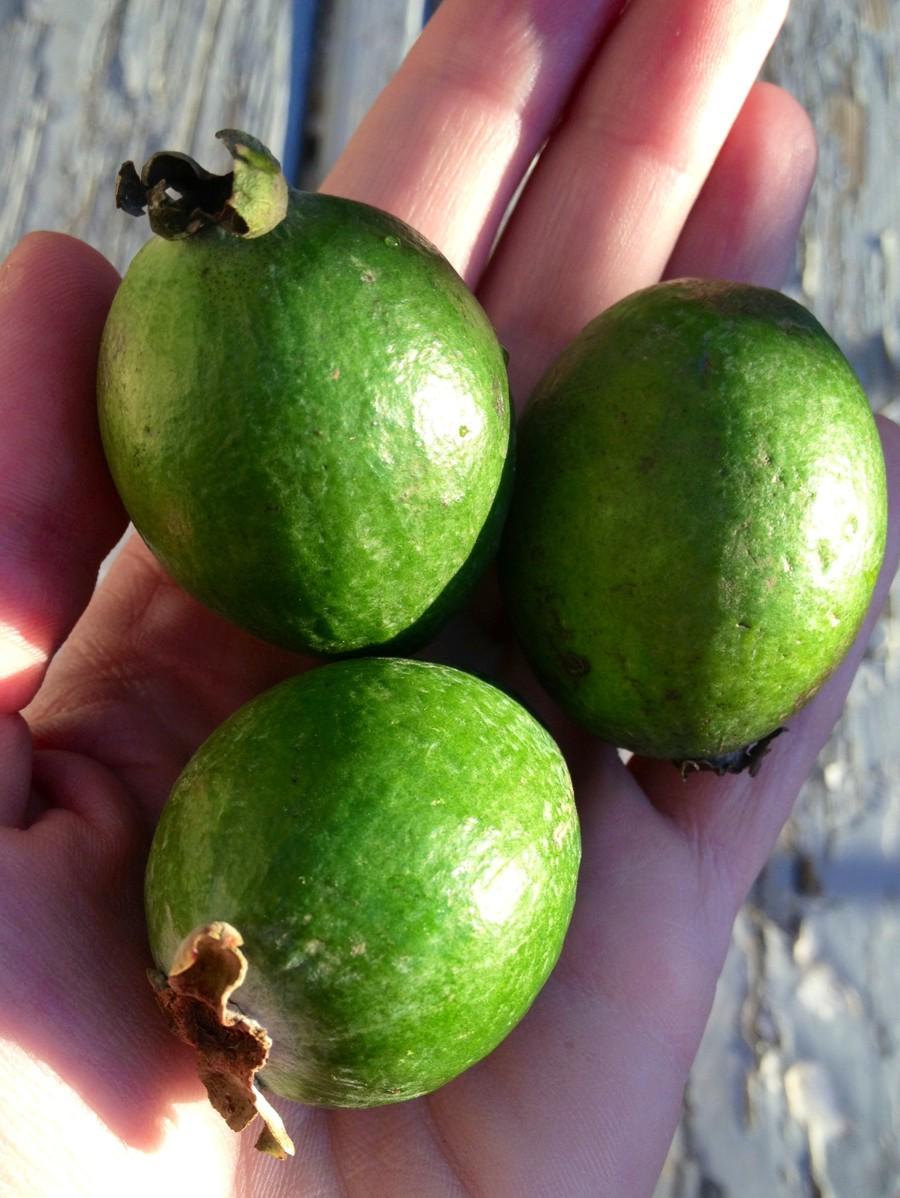 Как красиво сделать канапе из фруктов фото