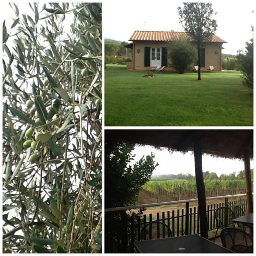 зеленые оливы и прямолинейные виноградники, огромные дубы, кедр и лавандовые кусты