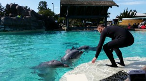 seaworld_dolphins_20160114