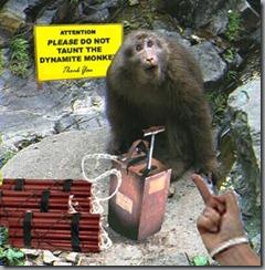 Dermolition Monkey