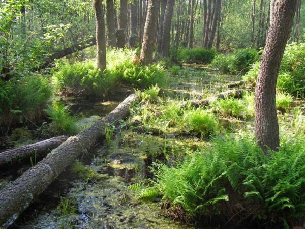 болото Бондар_вське