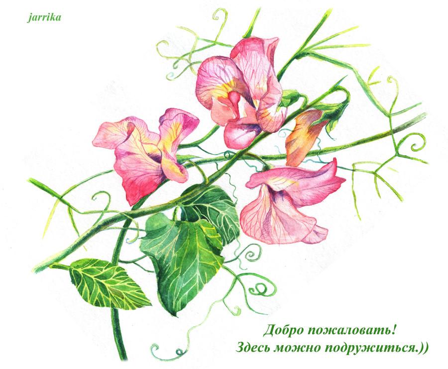 горошек_2