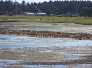 Mudflats South of Jetty