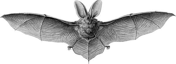 bat-600px
